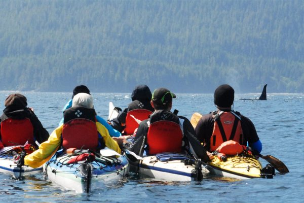 orca kayaking johnstone strait BC killer whales