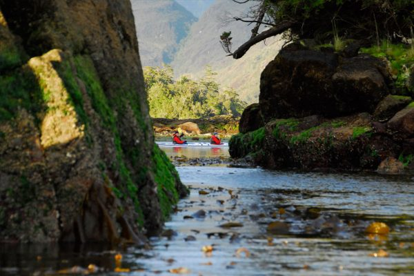 kayak patagonia wildlife