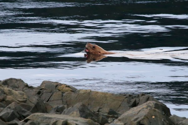 Sea lion close to basecamp