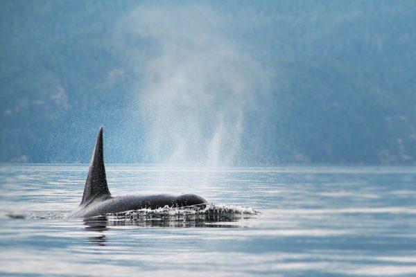 orca family tours kayaking British Columbia Canada
